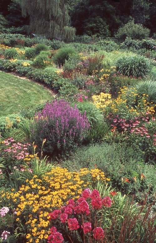 Perennial border in summer